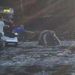 Horgászoktól kért segítséget egy bálna