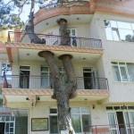 Photo: Amikor a fák az épületek részévé válnak