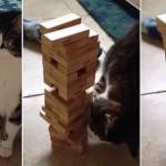 Így jengázik egy macska [videó]