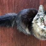 26 éves a világ legidősebb macskája