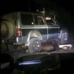 Photo: Sikerült kiszabadulnia a terepjáró alá szorult, elütött medvének