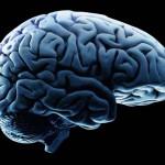 Mesterséges agyat állították elő amerikai kutatók