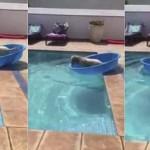 Becsónakázott a medencébe esett labdájáért a trükkös kutya