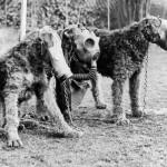 Kutyák gázálarcban