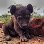Aranyos fotósorozat aprócska állatkölykökről