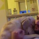Szívmelengető videó – így kért bocsánatot gazdájától a bűnbánó kutya