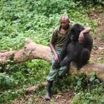A vadőr vigasztalta az árván maradt hegyi gorillát