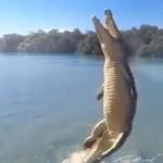 Elképesztően magasra emelkedett fel a krokodil, hogy megszerezze a zsákmányt