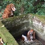 Egy hétig őrizte bajba jutott barátját a hűséges kutya