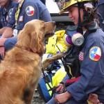 Különleges születésnapot szerveztek 9/11 utolsó élő mentőkutyájának