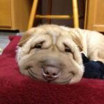Mosolygó kutyák, akik midenkit felvidítanak