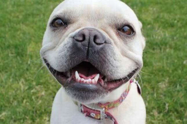 mosolygo-kutyak-2