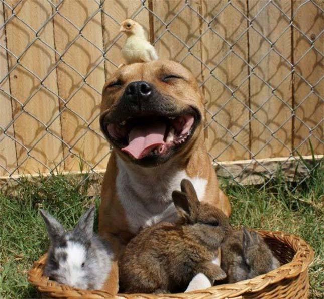 mosolygo-kutyak