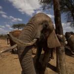 Elefántcsont-hadurak – orvvadászok nyomába ered az oknyomozó riporter