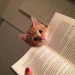 Photo: Macskák, akik egyáltalán nem törődnek a privát szférával