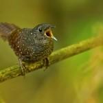 Több mint 200 új fajt fedeztek fel a Kelet-Himalájában