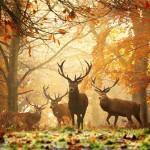 Varázslatos állatos fotók az ősz jegyében