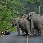 Felbőszült elefántok ijesztettek rá egy motorosra