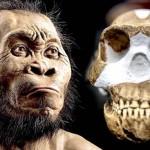 """Eszközhasználó lehetett a Homo naledi, az ember távoli """"unokatestvére"""""""