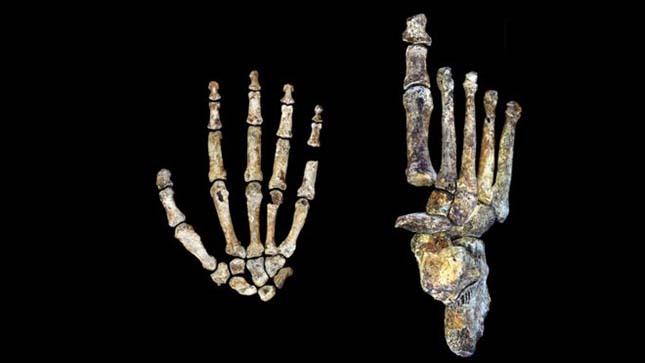 homo-naledi-csontok