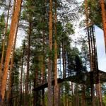 A különleges Tükörkocka – láthatatlan hotelszoba a fenyőerdőben