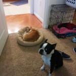 Photo: Kutyák, akiket csúnyán kitúrtak a helyükről
