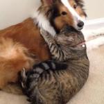 Elbűvölő kutya-macska barátságok