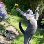 Photo: Tökéletesen időzített macskás képek