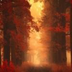 Varázslatos őszi tájképek egy fiatal cseh fotóstól