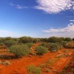 Hat napot élt túl víz nélkül a forró ausztrál sivatagban egy eltévedt férfi