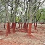 Photo: Öt éve történt a vörösiszap-katasztrófa