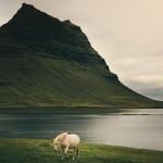 Mesebeli tájakon élnek az izlandi lovak