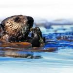 Magára talált az alaszkai vadvilág az Exxon Valdez-katasztrófa óta