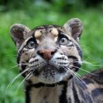 21 gyönyörű és ritka macskaféle, amit kevesen ismernek