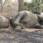 Napokra börtönbe került három újságíró, mert a Zimbabwében zajló elefántvadorzásról írtak