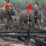 Elefántok segítenek az erdőtüzek megfékezésében Indonéziában