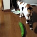 Miért félnek a macskák az uborkától?