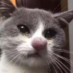 Photo: Pórul járt macskák, akik méhcsípés áldozatai lettek