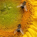 Régészeti leletek alapján már majdnem 9 ezer éve méhészkedik az ember