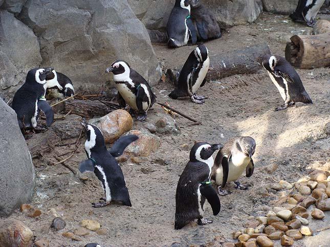 pingvin-3