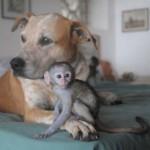 Kutyájukkal együtt utazza be a világot egy házaspár, hogy bajban lévő állatokon segítsenek