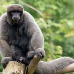 Bepillantás a perui Manu Nemzeti Park csodálatos és ritka élővilágába