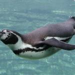 Újabb állatot ölhettek meg a dortmundi állatkertben