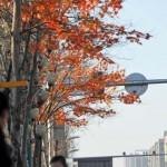 Műanyag leveleket ragasztottak egy kínai város fáira