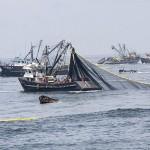 Ekkora mennyiségű halat fognak ki Európa tengeriből