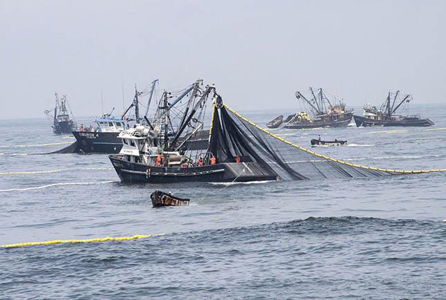ipari-halaszat