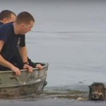 Tűzoltók mentettek ki egy jeges tóba esett kutyát