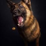 Tökéletes pillanatban elkapott fotók – a kutyák és a jutalomfalat