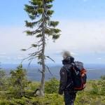 Közel tízezer éves a világ legöregebb fája