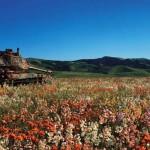 Hátrahagyott tankok, melyeket a természet vett a birtokába
